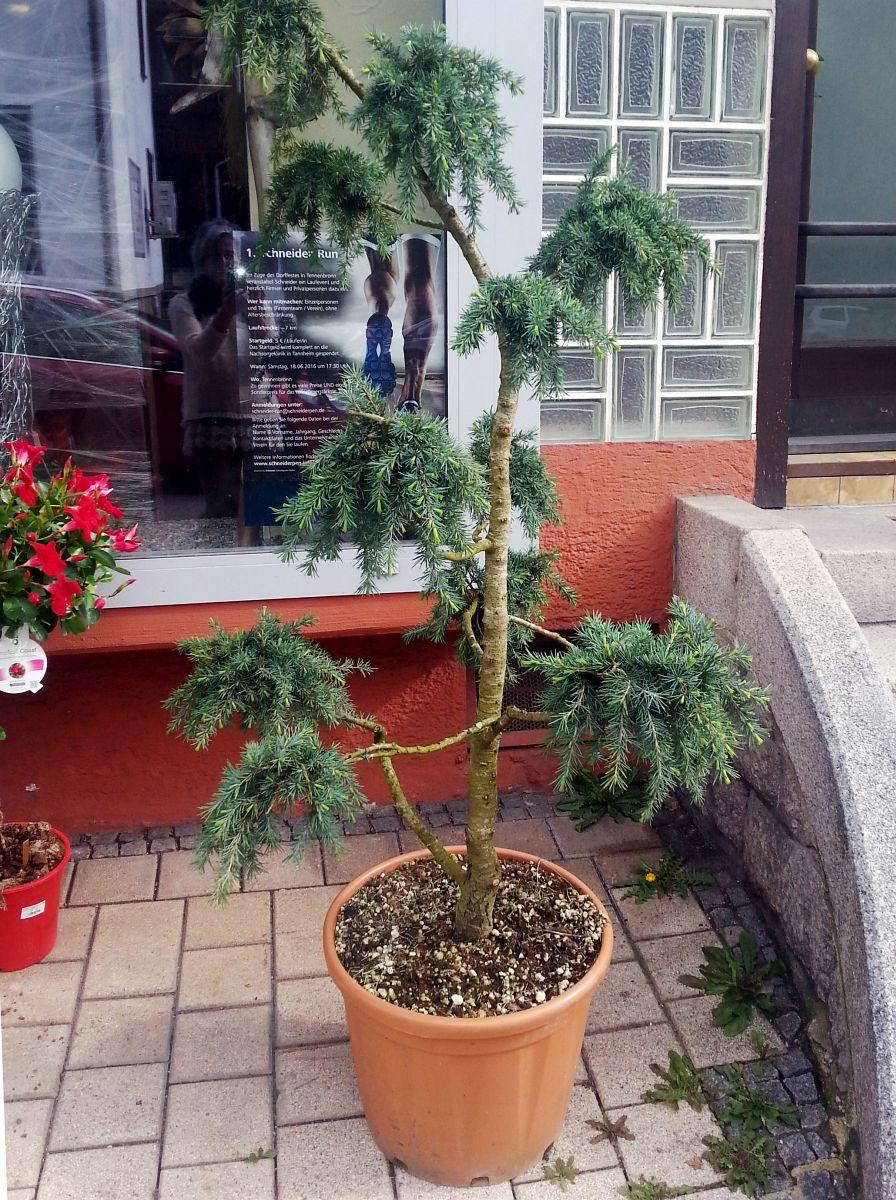 Gartenobjekte Floral Design Benzing